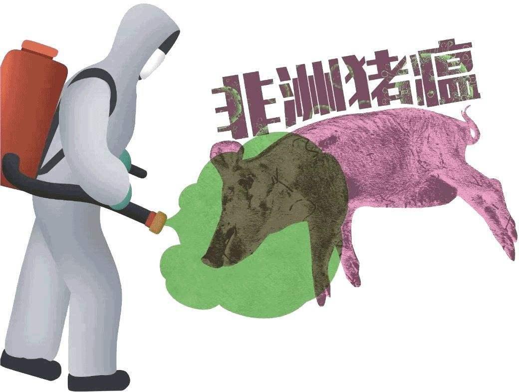 35年前巴西根除非洲猪瘟给我们的启迪(1)