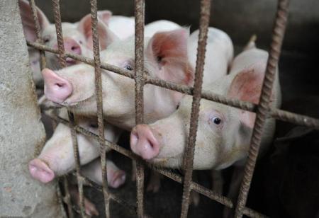 湖北:生猪异常死亡、抛弃病死猪等信访舆情较多