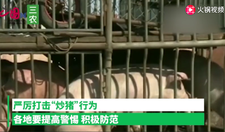 """有团伙丢弃死猪制造疫情舆论""""炒猪"""",农业农村部发文严打!"""