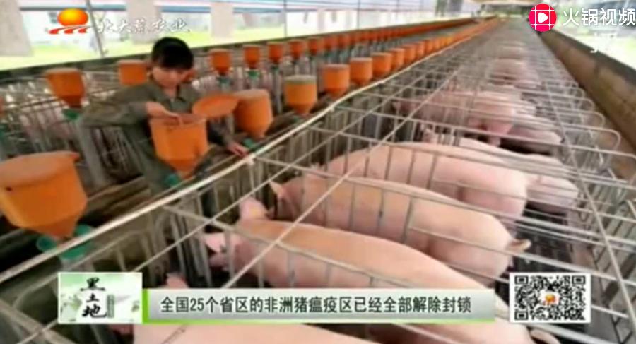 """又可以放心大胆吃猪肉了,生猪养殖户迎来""""春天"""""""