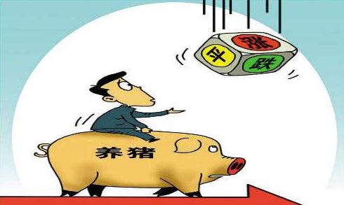 猪价涨还是跌?大部分地区无猪可出,猪价调整后涨势不改