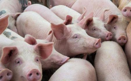 2019年07月17日全国各省生猪价格外三元价格报价