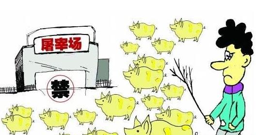 广西多地关停屠宰场,官方将严格防控非洲猪瘟疫情