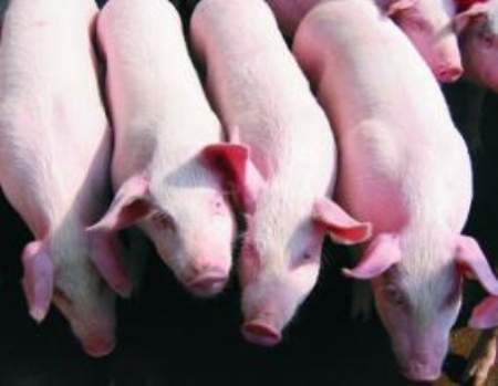 2019年07月18日全国各省生猪价格外三元价格报价