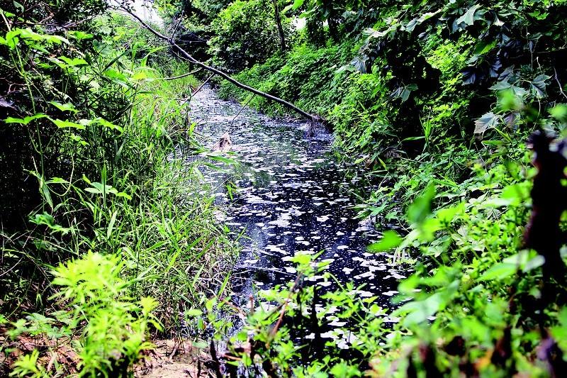 河池一路边再现病死猪被乱丢弃 谁在以身试法?