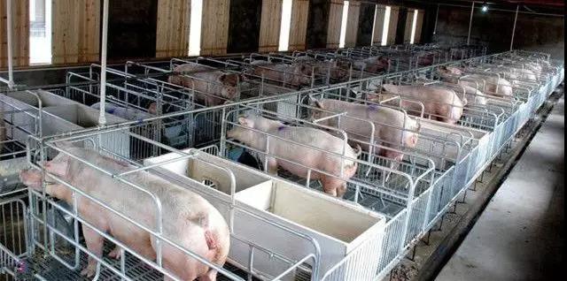 宁波生猪存栏降6.1%,预计下半年猪价仍高位运行!
