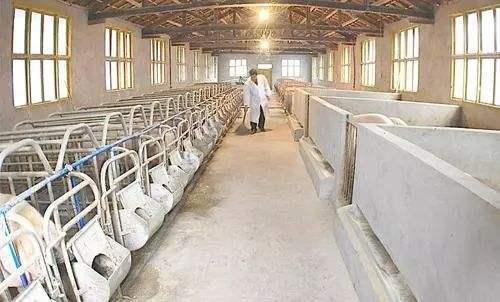 刘朋昌:猪场的复产是个庞大的系统工程,复产前必须进行六大思考