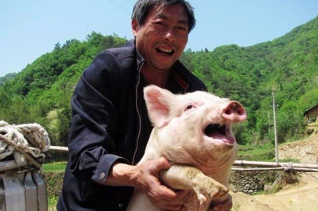 """非洲猪瘟养猪人何去何从?行业""""大考"""",浅析养猪人的出路在哪里"""