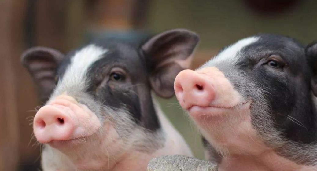 国统局:7月中旬14种重要生产资料价格环比上涨,农药生猪涨幅居首位