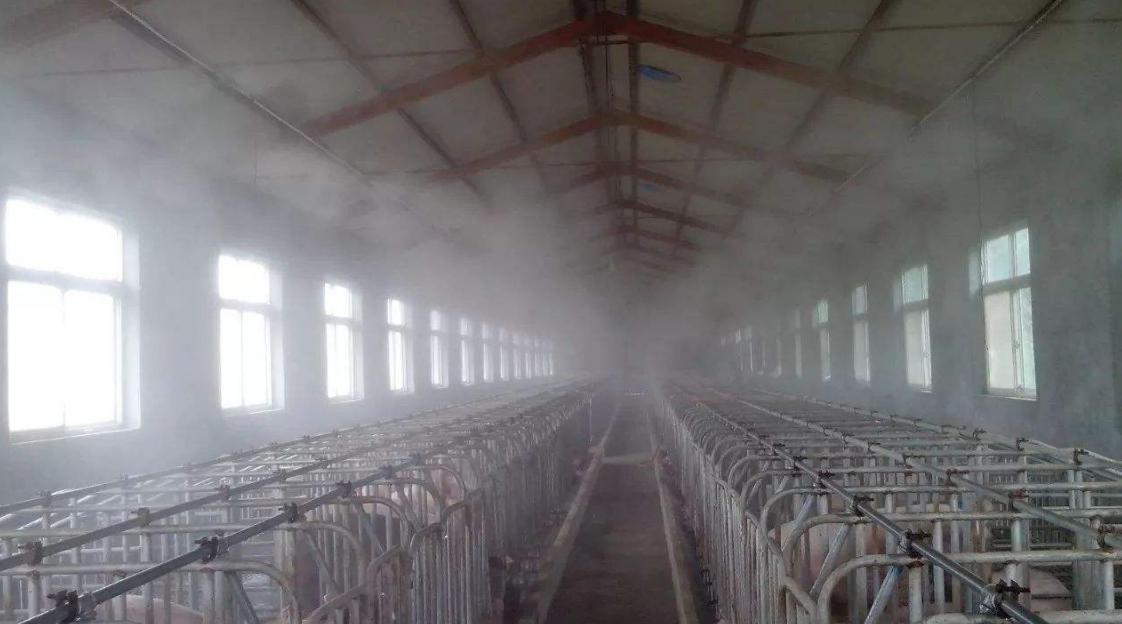 猪场常用消毒剂种类及注意事项,你真的了解消毒剂吗?