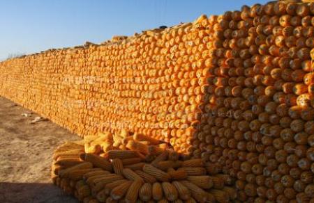 玉米远期供应存忧跌势有望放缓 临储拍卖成交下滑