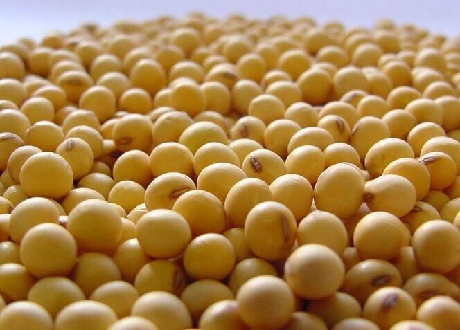 沉闷的豆粕市场何时再次迎来爆发?第三季度国内豆粕上涨困难