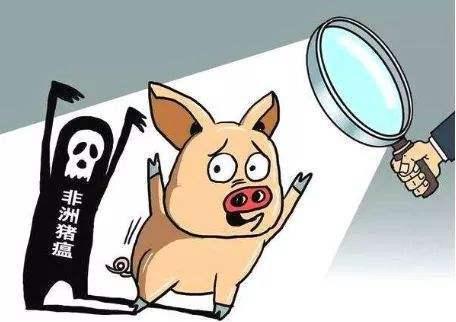 非洲猪瘟最新消息,又一国沦陷,海关警示:防止斯洛伐克非瘟传入