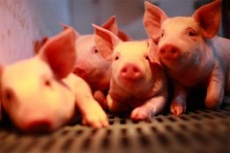 7月27日全国生猪价格小幅微涨,西南地区疫情减缓,8月能否走出低价区?