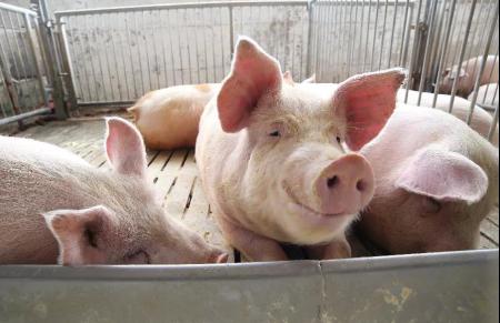 2019年07月29日全国各省生猪价格外三元价格报价