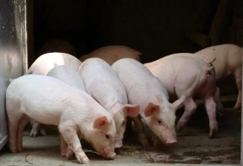 安徽:成本略降叠加价格上涨,上半年生猪净利润扭亏为盈