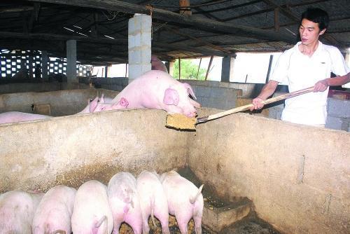 你真的会消毒吗?养猪场消毒的十大误区,你中招了几个?