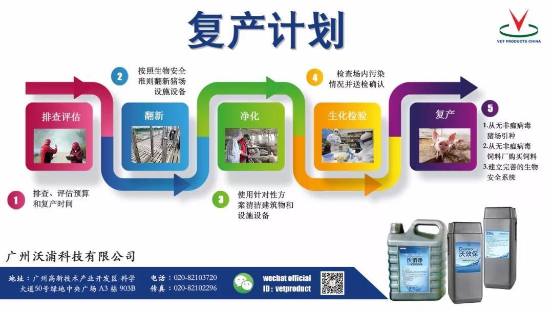 您还在养猪吗?沃浦集团在中国寻找合作伙伴一起复养啦!