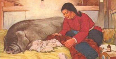湖南53.25%的养猪户不敢养猪,27.27%的养猪户年前退养