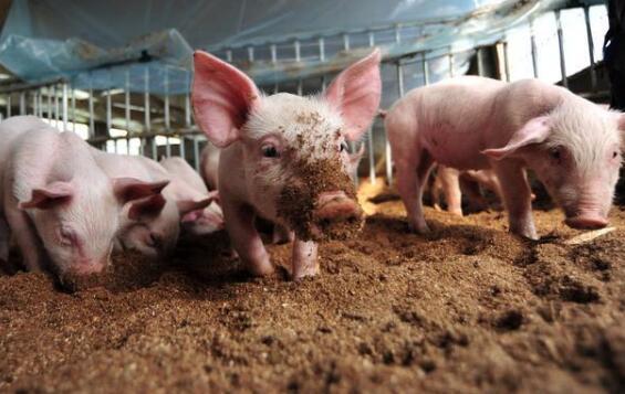 中央发布重要文件 !未来5年养殖业大势已现!重点发展区?
