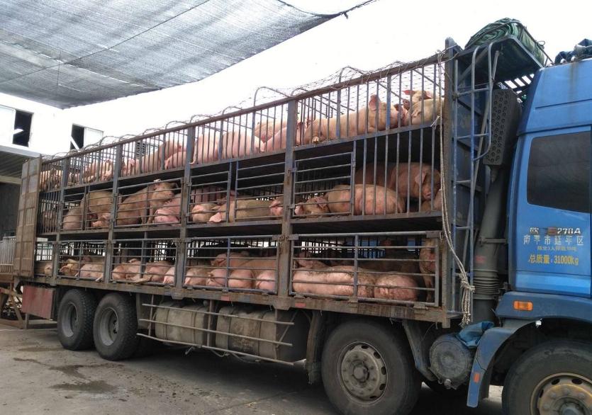 重磅!运输动物及其产品只能从这27个道口进入广东,附道口名单