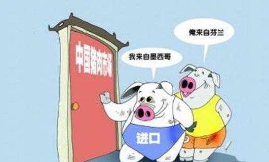 2019年上半年中国猪肉进口81.9万吨,同比增长26.4%