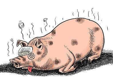 八月首例!湖北省洪湖市发生非洲猪瘟疫情