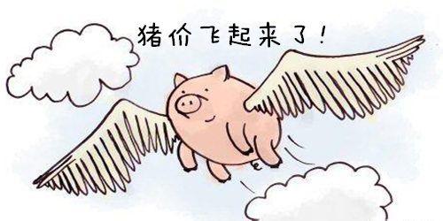 8月2日全国生猪价格主线稳定,南方一路飘红,北方上涨乏力!