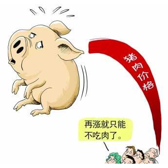 山东滨州:生猪行情不跌反涨,生猪价格持续高位运行