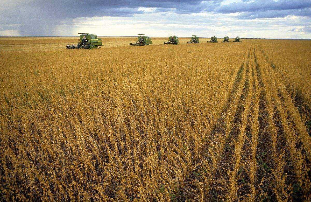 山东打造嘉祥大豆繁育基地,培育自主知识产权大豆品种