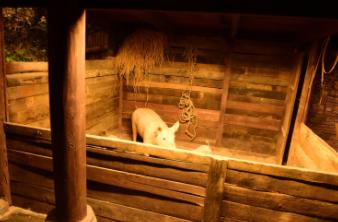 非洲猪瘟一周年系列(一):生猪养殖产业上下游遭冲击,存栏何去何从?