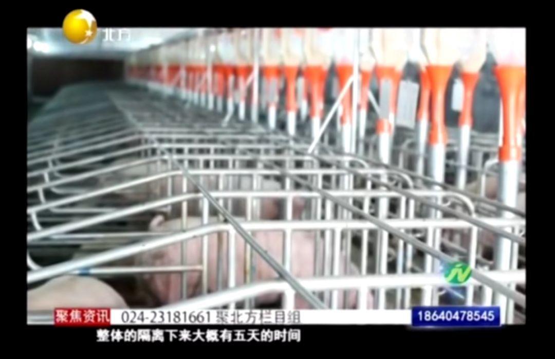 新民金泰扬翔农牧责任有限公司的专栏节目
