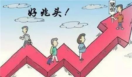 8月6日全国生猪价格向好,8月加速上涨,广西突破12元/斤!