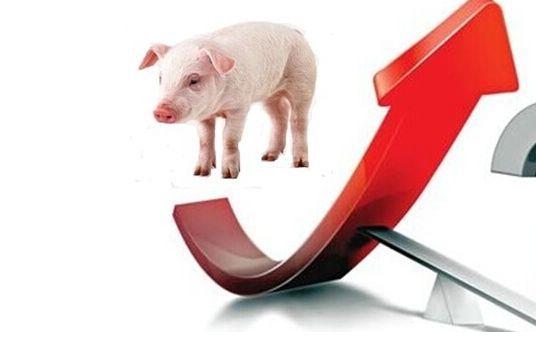 山东平邑:3月以来生猪价格以涨为主,生猪价格上涨原因分析