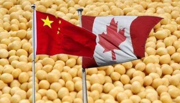加拿大对华出口猪肉、大豆油损失惨重 中国以外替代市场并不顺畅