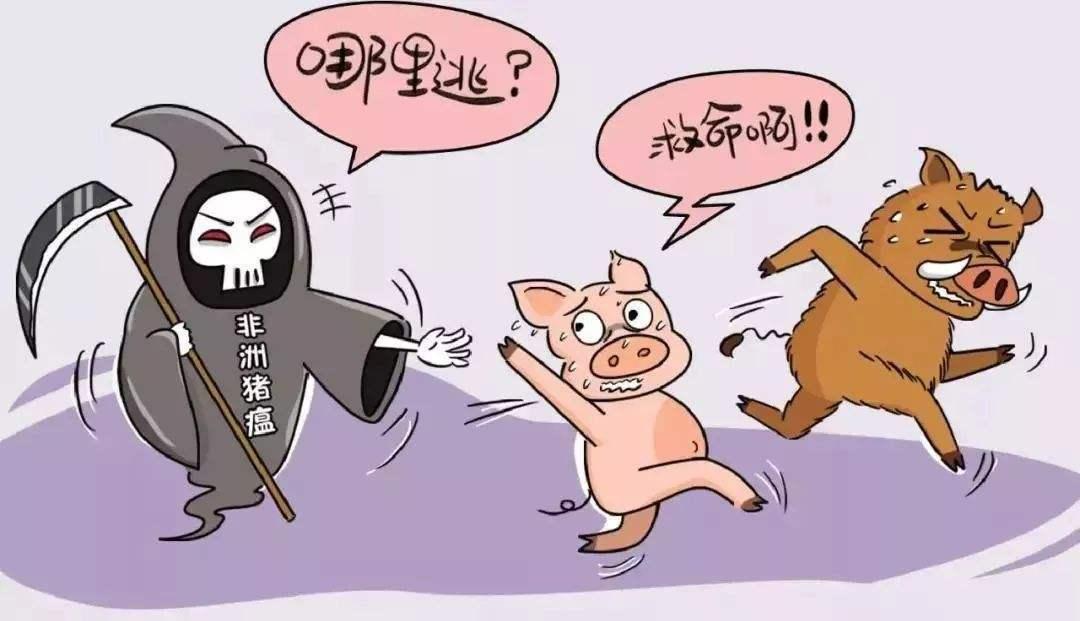 """一颗老鼠屎能坏了一锅汤,非瘟疫情传播非法调运又双叒叕""""立功"""""""