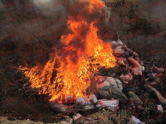 烧不完的死猪,令人作呕的恶臭|湖南攸县病死畜禽处理中心污染调查