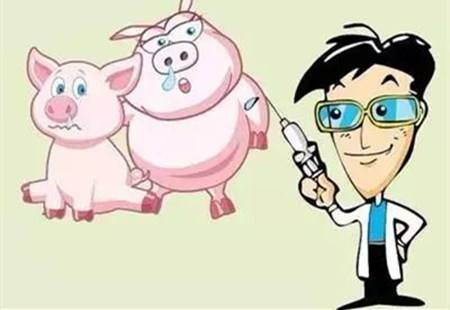 猪场免疫失败的种种原因分析及对策,猪疫苗保存有技巧