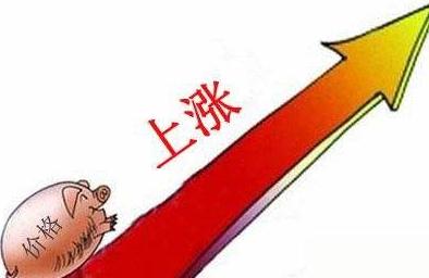 8月11日全国生猪价格表,广东稳居首位,均价冲刺11指日可待!