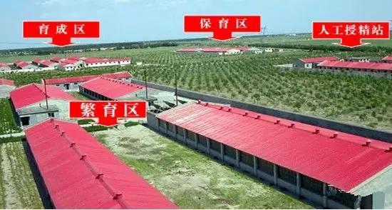规模化猪场要想万无一失 生物安全应该如何做?(一)