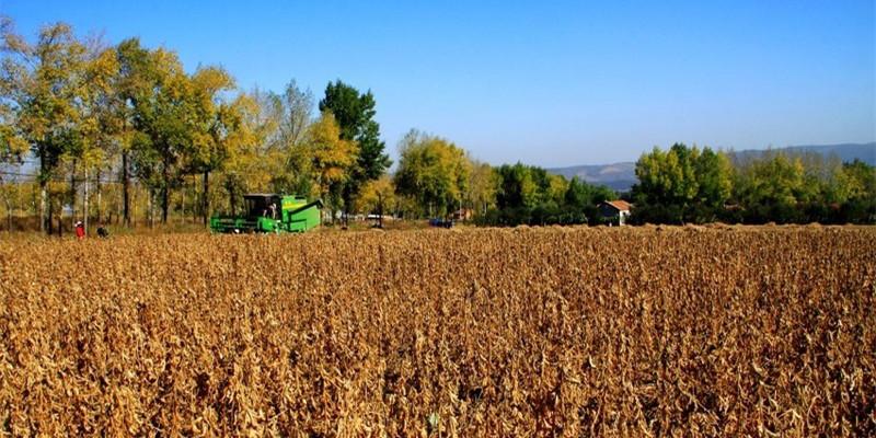 8月玉米豆粕供需报告:利多美豆大跌 国内豆粕又是如何应对?