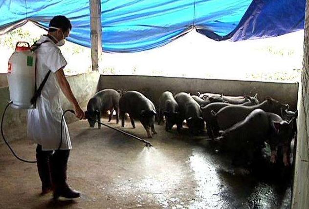 猪场复产制定消毒方案,先要理清消毒流程这些关键点