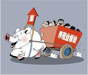 北京市场7月份猪肉价格走势分析,供应地生猪趋紧,猪价保持高位运行