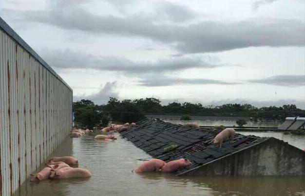 夫妇不听劝阻回家喂猪夜间遭洪水困!获救后丈夫被拘3天