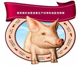 """猪价涨猪股跌 分化背后玄机大 能否重回""""同步强势"""""""