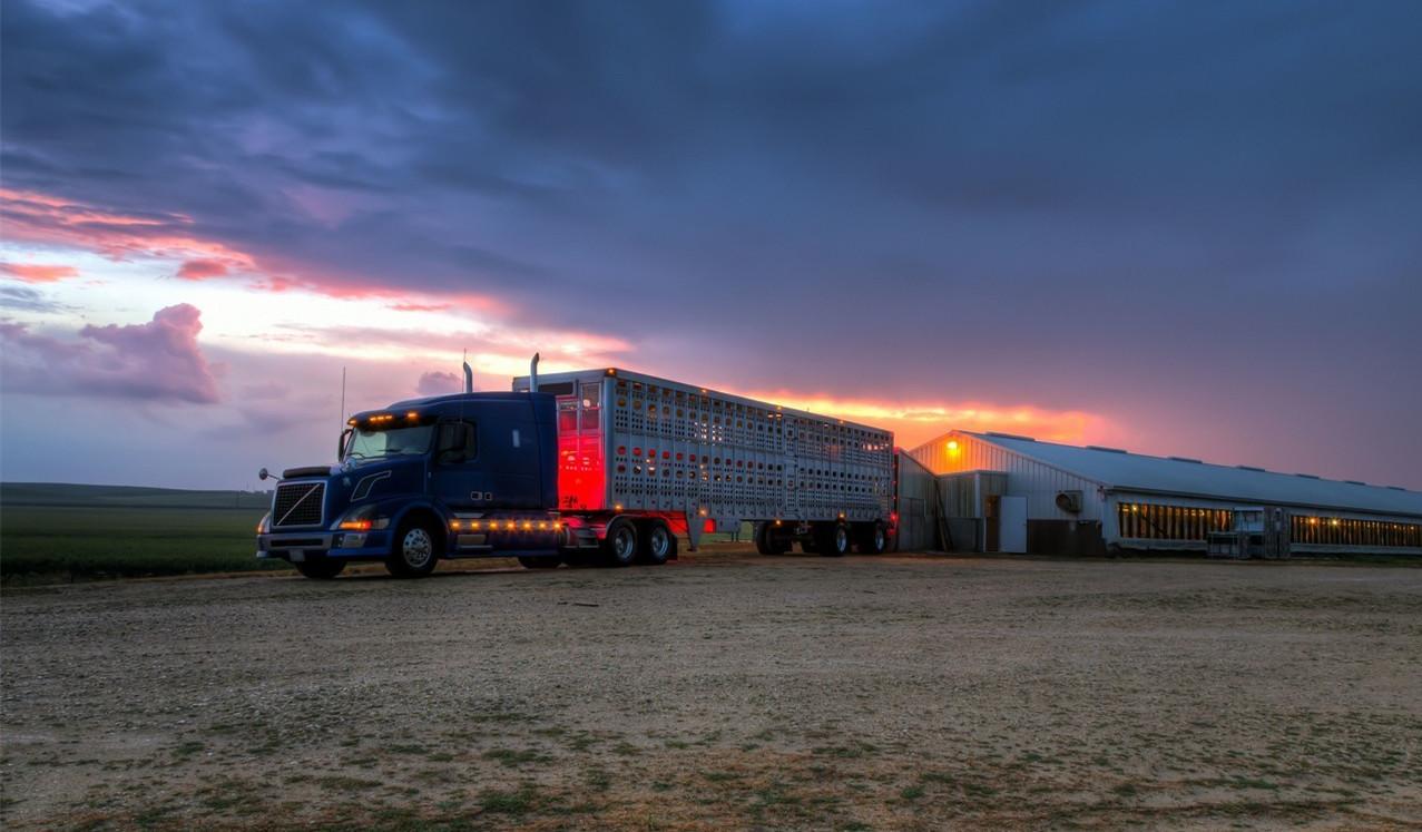 使用荧光粉研究牲畜拖车上的污染物转移
