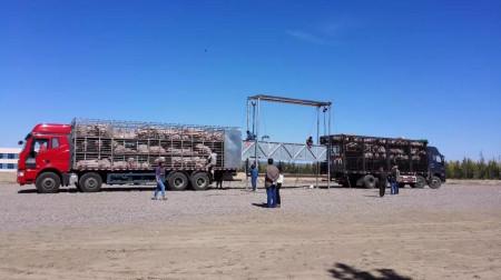 生物安全第三关——猪场对接站的设计