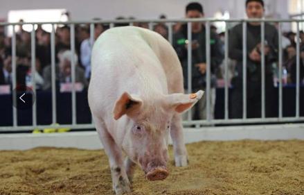猪肉价格持续看涨,看各省市如何出招稳定猪价!