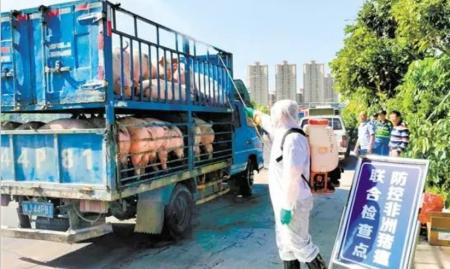 新福镇开展联合执法查获一辆违规运输生猪车辆