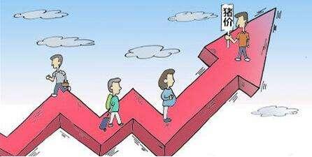 猪价已破历史高点,业内人士:明年春节前行情仍持续看涨